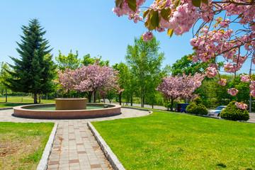 札幌ブランバーチ・チャペルの八重桜