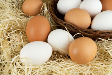 Freshly collected chicken eggs in a basket