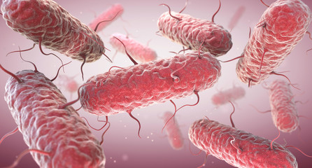 Enterobacteria. Enterobacteriaceae are a large family of Gram-negative bacteria