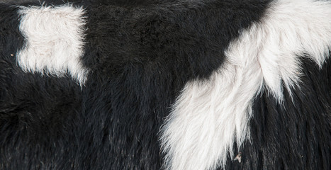 background of fur