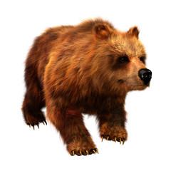 3D Rendering Brown Bear on White