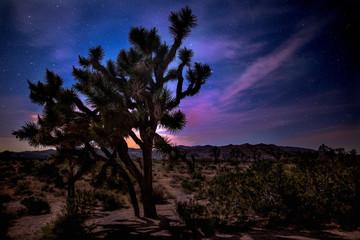 The Stars over Joshua Tree National Park in California