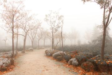 Bonito parque bajo una espesa niebla Wall mural