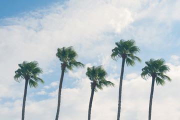 Copy space of silhouette tropical palm tree with sun light on blue sky. Summer vacation and  travel concept