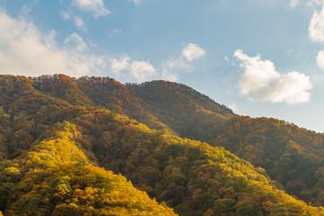 鮮やかに紅葉した山