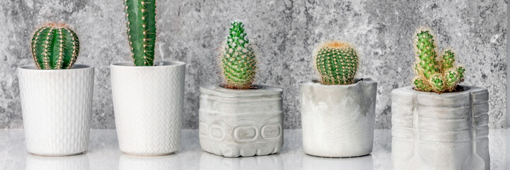 Cactus plants in different pots. Potted cactus house plants on white shelf against stone industrial wall. Panoramic copy space.