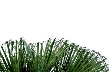 Tropical palm tree leaves on light blue sky background for backdrop pattern