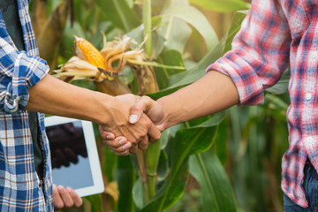 Young smart farmer standing and shaking hands on corn  field. Use a tablet.Smart agriculture. Farmer using tablet corn planting. Wall mural