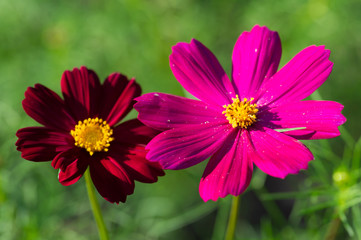 pink red flower