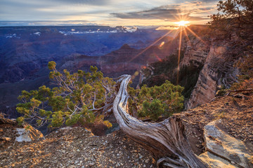 Grand Canyon National Park, view point near Historic Village Lodges