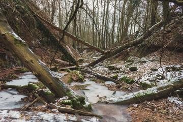 Winter Wald - Winter Forest