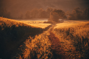 Spoed Foto op Canvas Baksteen Road in gold summer wheat field