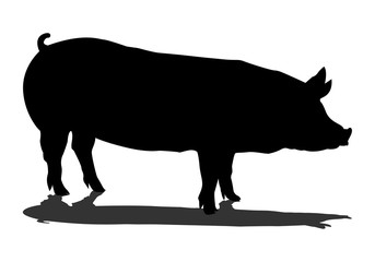 Sign pig. Isolated black silhouette pig on white background. Vector illustration - Vector