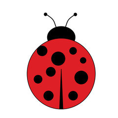 Animal-Top View of a Cartoon Lady Bug