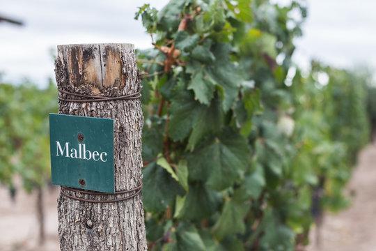 Vineyard in Mendoza wine country, Argentina