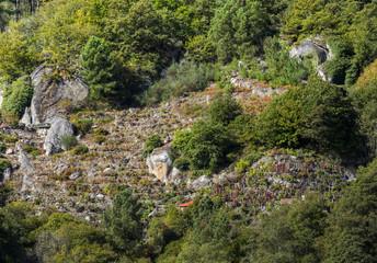 Vineyards on rocky slopes among chestnut tree forests