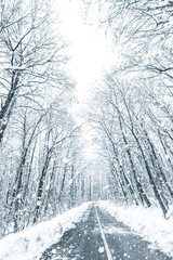 Winter forest snow road. Forest road winter snow view.