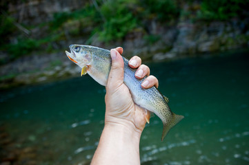 Woman holding cutthroat trout