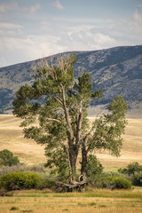 Tree with fields and mountains in the distance