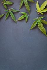 Marijuana leaves on flat grey surface