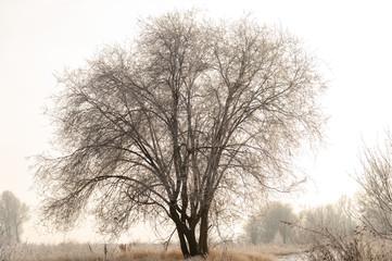 Frozen trees in the fields