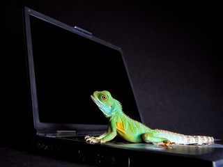 Colorful gecko walks on a notebook