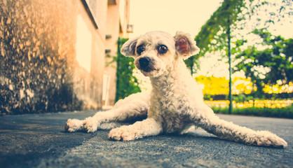DOG POSE PARA FOTO