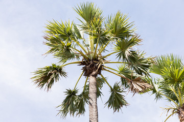 palm tree on background of blue sky