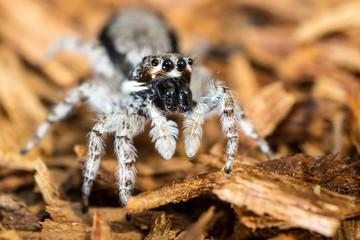 White spider on wooden