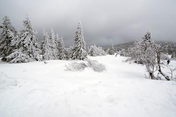 Zieleniec - lesny krajobraz zimą
