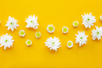 Composition of white yellow flowers. Chrysanthemums on yellow paper.