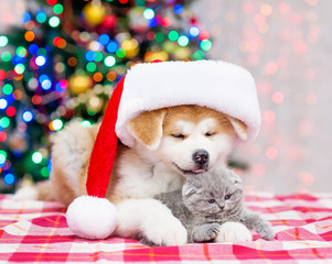 Akita inu puppy in big red santa hat hugging tiny kitten with  Christmas tree on a background