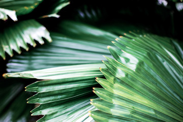 Palm leaves with texture.