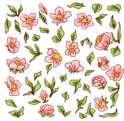 Hand-drawn vector sakura flowers for wedding or spring design. Isolated floral elements on white