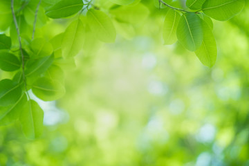 Close up beautiful view of nature green leaves on blurred greenery tree background with sunlight in public garden park. It is landscape ecology and copy space for wallpaper and backdrop.