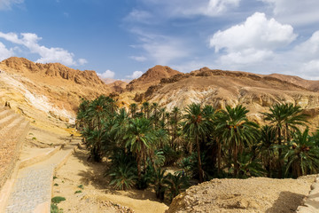 Poster de jardin Tunisie Landscape of oasis in the canyon in stone desert.