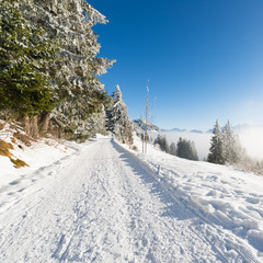 Joyful winter day in the snowy forest before the Christmas holiday.  Road to the mountains. Switzerland. Rigi