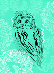 Owl on a green background