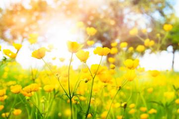 wilde frühlingsblumen butterblumen