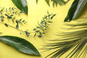 Wall Mural - Different tropical leaves on color background