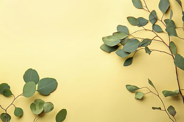 Wall Mural - Green eucalyptus branches on color background