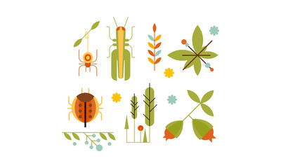 Collection of insects and plants, nature and ecology design elements vector Illustration