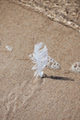a feather stuck in the sand on the beach. vacation memory. sea