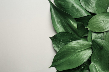 Wall Mural - Green tropical leaves on white background