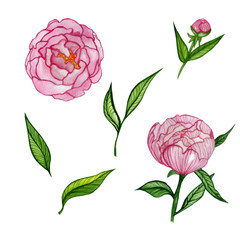 watercolor set with peony