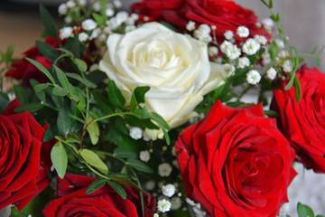 weiße Rose, Rose, Muttertag, Hochzeit, Hintergrund, Valentinstag