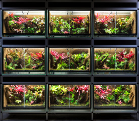 Terrarium rack. A series of nine tropical rain forest vivarium ideal for poison dart frog pet