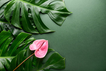 Wall Mural - Green tropical leaves and flower on color background