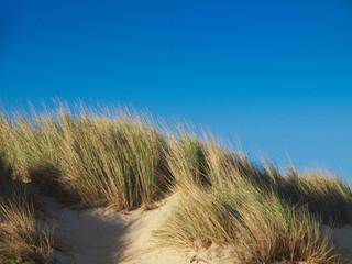 Dune with beachgrass against blue sky
