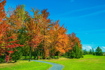 Multi-colored trees, green lawn and blue sky